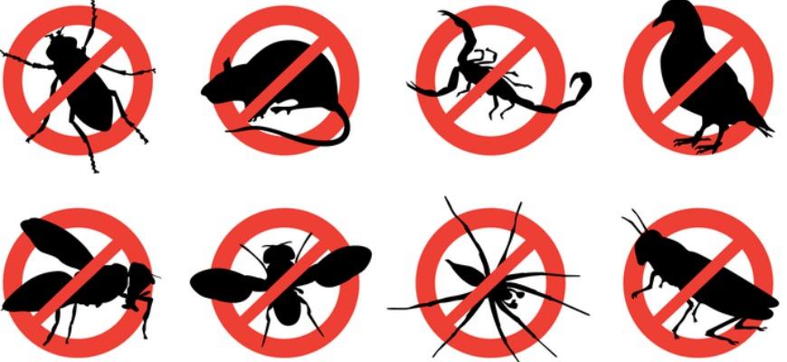 نتيجة بحث الصور عن شركة مكافحة الحشرات الطائرة بجدة