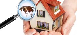 شركة مكافحة الحشرات بالمدينه المنوره