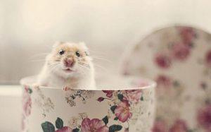 شركة مكافحة الفأران بالدمام