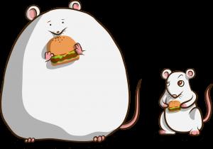شركة مكافحة الفئران بالدمام