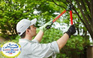شركة تنظيف وتنسيق حدائق بالطائف